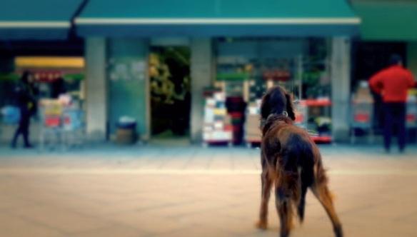 Rocco Mortelliti, Hungry Dog, still from video